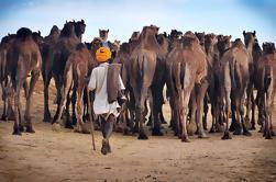 Excursión de un día a Pushkar desde Jaipur a Jodhpur