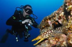 Buceo Multi Dives en Playa de las Américas