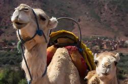 Randonnée privée de chameau dans les montagnes du Haut Atlas à partir de Marrakech