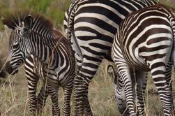 Safari de 11 días en el sur de Tanzania