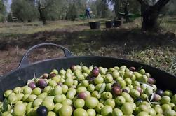 Tour de l'huile d'olive de Séville