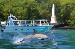 COMBO: Bahía Kealakekua y Snorkel de Delfín Salvaje con Almuerzo