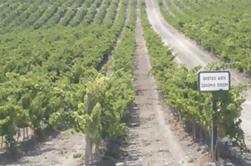 Private Jerez Winery y Jerez Brandy Experiencia de Sevilla