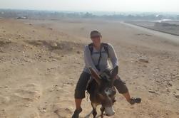 Monte um burro ao longo da Cisjordânia de Luxor