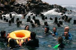 Islas Palomino Tour y natación con lobos marinos
