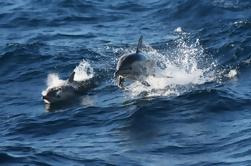 Port Stephens Day Trip from Sydney Incluindo Dolphin Watch Cruise