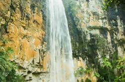 Excursión de senderismo del Parque Nacional Springbrook Incluyendo las Cataratas de Purling Brook de la Costa de Oro