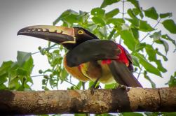 Tour Privado: Observación de Aves