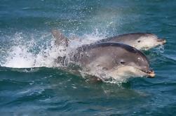 Dingle y Fungie Dolphin en barco desde Killarney
