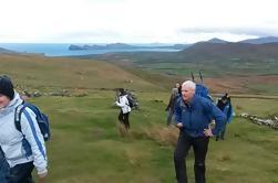 Excursión de un día a Dingle y Slea Head desde Killarney