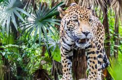 Zoológico de Belice y el Museo de Belice Tour