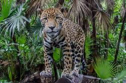 Zoológico de Belice y Tour del Santuario de Babuinos desde Belice C