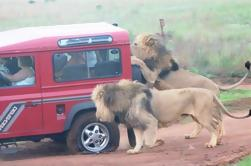 Mini Safari Tour de Durban