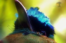 Tour de Observación de Aves en Monteverde Cloud Forest