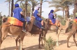 Promenade à la Demi-journée de Marrakech à Palm Grove