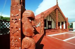 Shore Excursion: Tour de Hop-On Hop-Off de la ciudad de Rotorua desde Tauranga