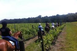 Wine Tour - Paseo a caballo en los viñedos