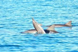 Nadar con delfines silvestres en la isla de Benitiers: Tour de un día desde Grand Riviere Noire