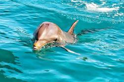 Nature Discovery Tour: delfines salvajes, tortugas gigantes, cocodrilos y el sur salvaje de Port Louis