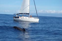 Avistamiento de ballenas y delfines Yate de vela Charter de pequeños grupos
