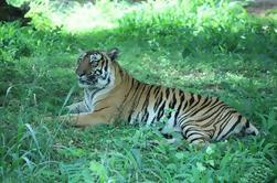 Bannerghatta National Park Excursión de un día privado con Butterfly Park y Safari desde Bangalore
