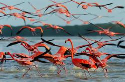 Tour Privado: Ek Balam y el Santuario de Flamencos Rosados con Fotógrafo de Cancún, Tulum o Riviera Maya