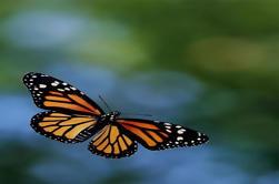 Visita privada al Santuario de la Mariposa Monarca desde la Ciudad de México