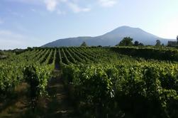 Wine Tour and Lunch with Winetasting and Vineyard Visit