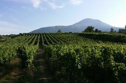 Tour de vinos y almuerzo con visitas a vinos y viñedos