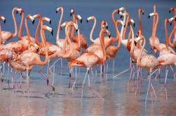 Excursión guiada al Safari en el Parque Nacional de Arusha