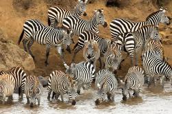 Safari de día completo en el Parque Nacional Tarangire en Tanzania