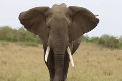 Excursión privada: Excursión de un día al Parque Nacional Ngorongoro