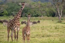 Safari de Arusha desde el Parque Nacional Arusha