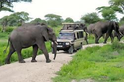 Safari de día completo al Parque Nacional Tarangire desde Arusha