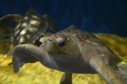 Sevilla Sightseeing tocht met Aquarium en boottocht op de rivier Guadalquivir