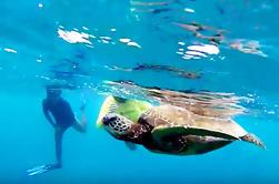 Excursión guiada de snorkel en la costa norte de la tortuga
