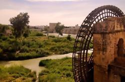 Excursión de día de Sevilla a Granada con visita guiada de Córdoba