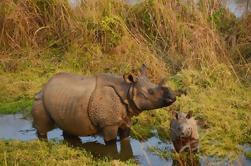 3-Night Wildlife Adventure Tour van Kathmandu